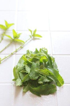 ミントの葉をきれいに洗い、 茎と葉に分けます。