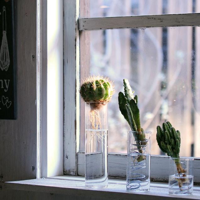 ワイヤーと空き瓶でDIY♪ 多肉植物やサボテンの水栽培を楽もう