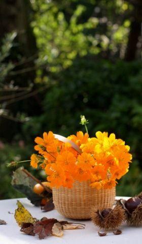 秋の花を楽しむ2 庭、オレンジ色に装う