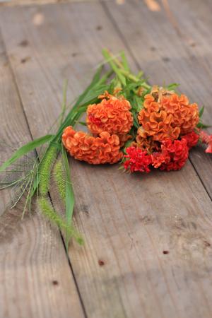 ケイトウの花を使って、 秋のアレンジを楽しんでみませんか。