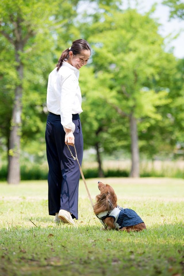犬 自撮り セルフィー 愛犬 撮影 簡単