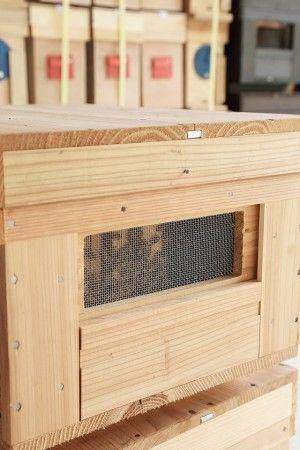 いま、この1つの箱の中には1万匹以上のミツバチがうごめいています。
