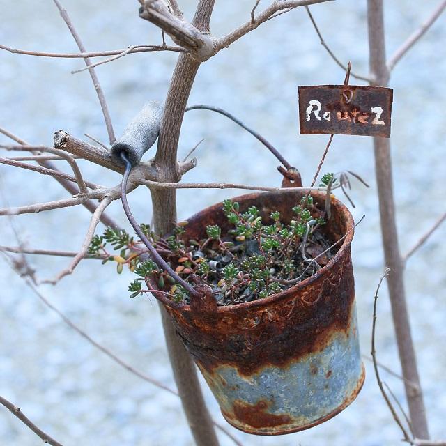 春を待つ多肉植物のジャンクガーデン~冬越しのポイント