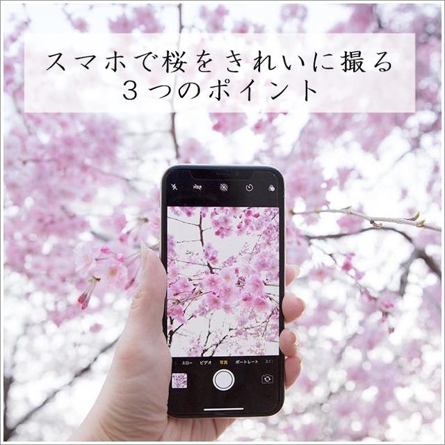 スマホで桜をきれいに撮る3つのポイント