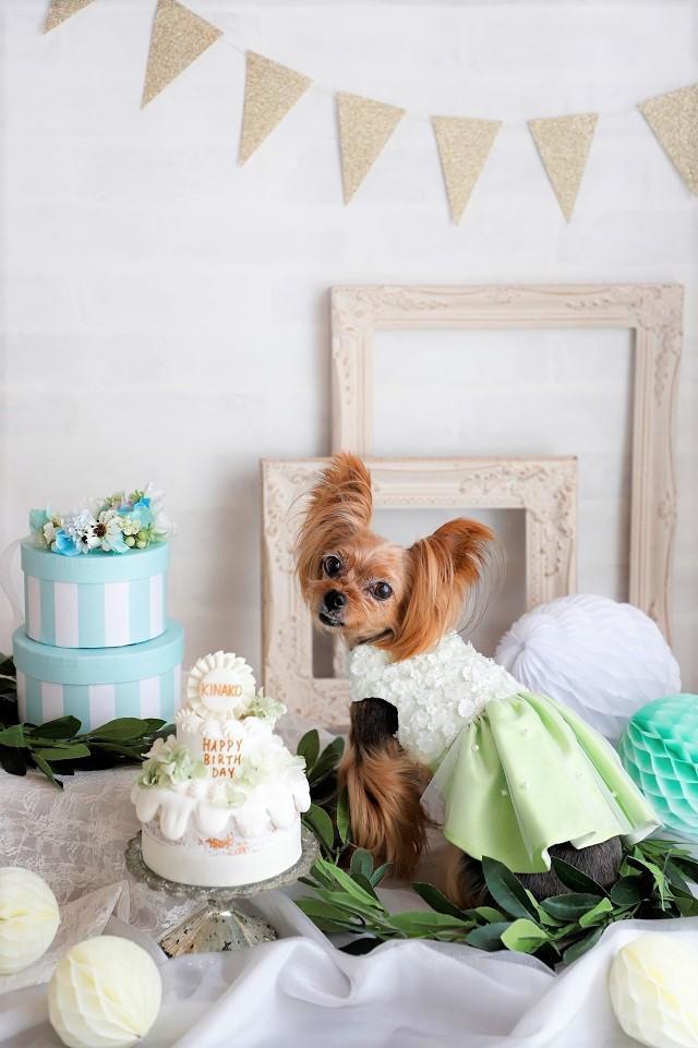 犬 イヌ 写真 撮り方 バースディフォト アニバーサリー