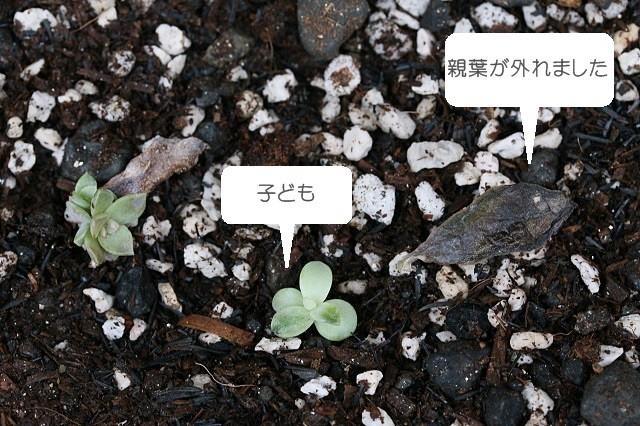 42ytakahashi_20160128_007