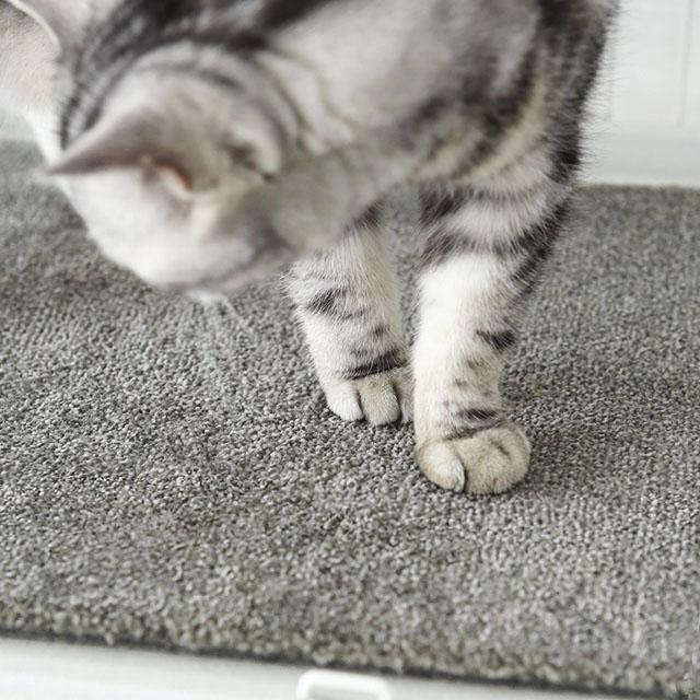 1枚ずつ買えて便利♪ 猫との暮らしに無印タイルカーペットがおすすめな5つの理由