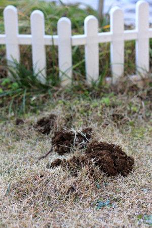 モグラのトンネルを発見すると、 土の中のことが心配になり、 気が気ではありません。 実際に、土が盛り上がり、 深く掘って埋めたはずの球根が、 ぽこっと地上に出ていることがしばしば。