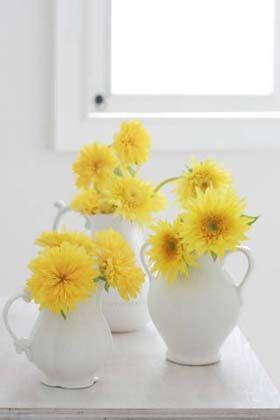 八重咲き向日葵を楽しむ