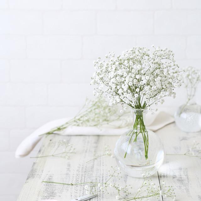 [室内花撮影のコツ]白い花を白く撮ろう! ホワイトバランス(WB)の使い方