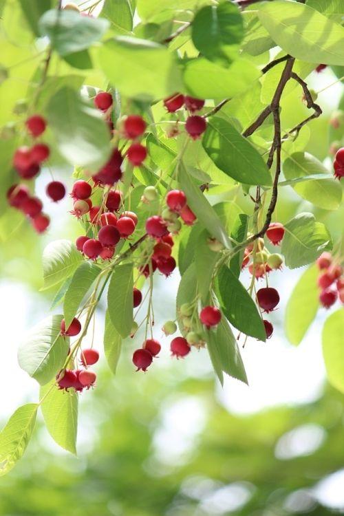 旬のベリーで作るスパイス入り果実酢