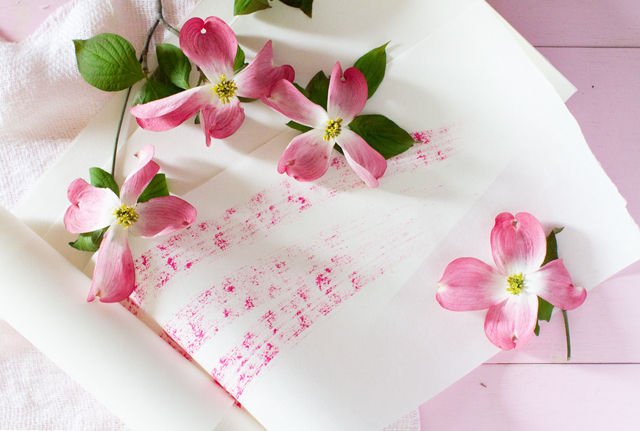 桜からハナミズキへ ~友好を伝える花