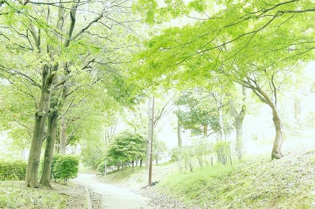 jmtaguchi_20160530_002