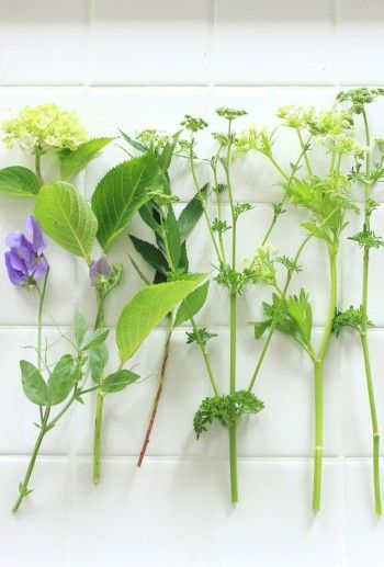 野菜の花だけでは 少し寂しい印象になりそうなので、 庭に咲いていたアジサイや サマースイートピーの花も 一緒にアレンジしました。