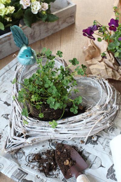 籠の大きさによって、ポットごとだと大きいようでしたら、 少し土を減らしたり、また直接植えてもいいですね。
