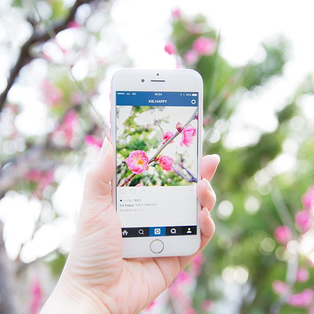 iPhone標準カメラで、キラキラの玉ボケを撮るコツ。梅の花をきれいに撮ろう!