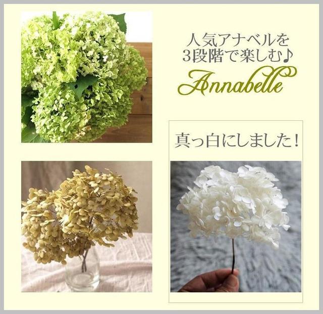 紫陽花のドライフラワーを真っ白くする方法