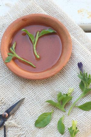 カットした茎の部分は 葉っぱ2、3枚残して 他の葉、花芽などは切り取って下さい。