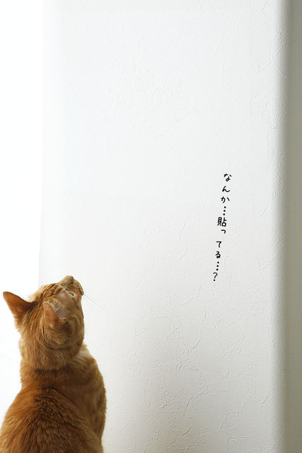 misaeyano_20160611_007