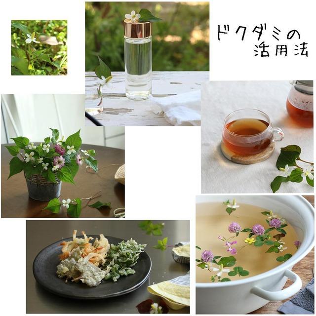 [野花生活] 暮らしに役立つドクダミの活用方法 5選