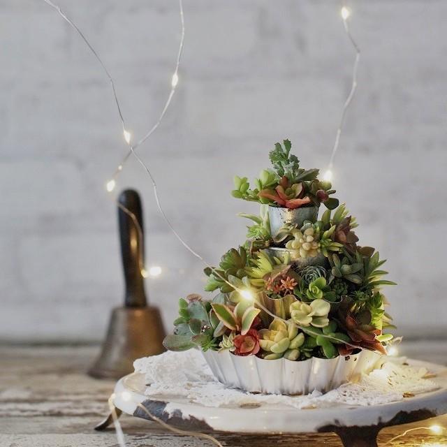 100均のお菓子の型で作る、多肉植物の小さなクリスマスケーキ