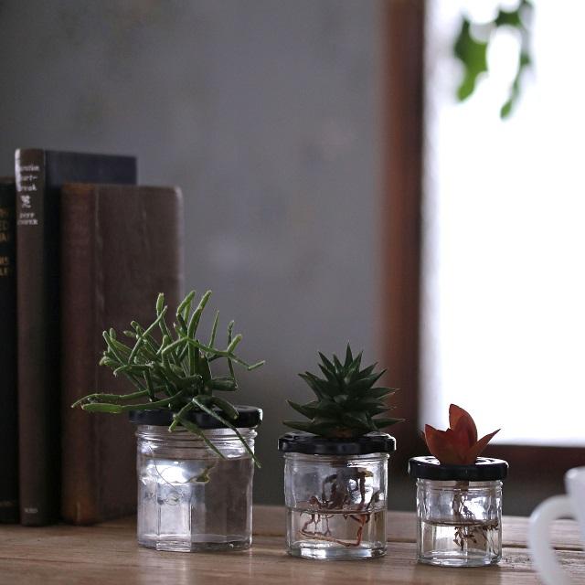 空き瓶でDIY♪ 多肉植物やサボテンの水栽培容器の作り方