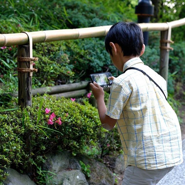 ホテル椿山荘東京 蛍 ほたるの夕べ 鑑賞 子ども 散歩