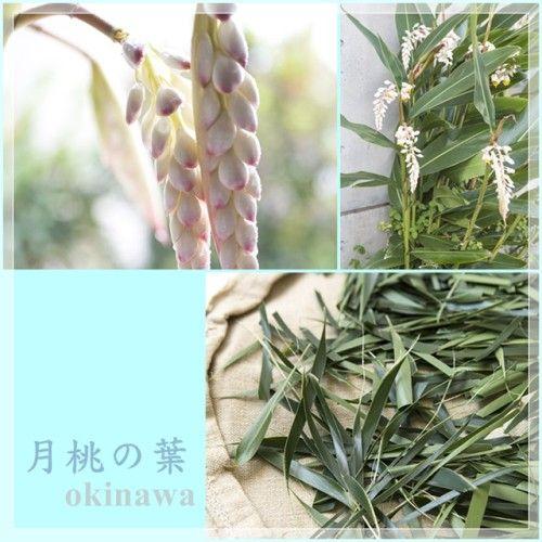 yShimizu_20140524_1