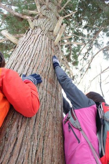 時には、巨木の生命力を感じながら ストレッチをしたりと、 疲れをためないような配慮が 随所に行われているのも 一般的なウォーキングとの違い。