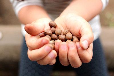 コーヒー豆みたいな実がたくさん採れました。 子どもは木の実拾いが好きですね!