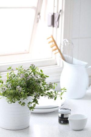 鉢植えのハーブを買い求め、 キッチンやテラスに鉢のまま置いておくと、 料理のたびにすぐ使えるので便利です。