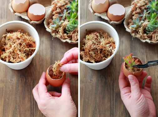 イースターにちなんで卵の殻を使ったプチガーデン♪