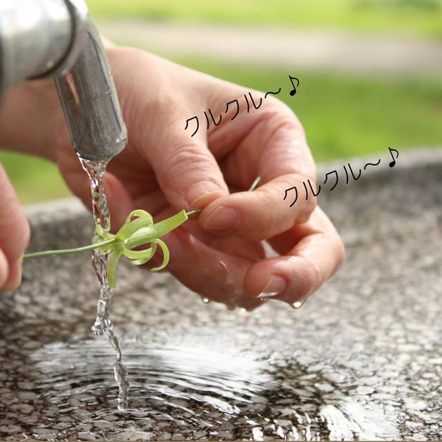 [雑草生活]親子で自然と遊ぼ♪ タンポポ水車の作り方