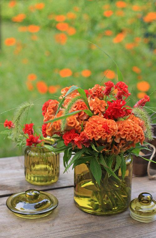 ケイトウで楽しむ、初秋のフラワーアレンジ