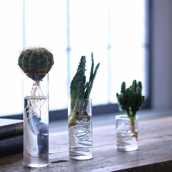 簡単! 多肉植物やサボテンを水栽培で育てる方法