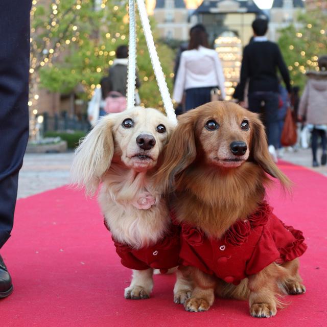 犬旅コンサルタントが教える! わんちゃんと楽しめるクリスマスイベント