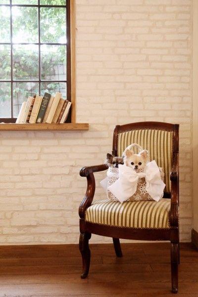 ハウススタジオで、愛犬とフォトレッスン♪ 撮影会レポート