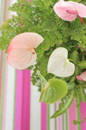 アンスリウムに合わせるのは、 観葉植物のアジアンタムとプテリス。 どちらも鉢ポットのまま使いました。