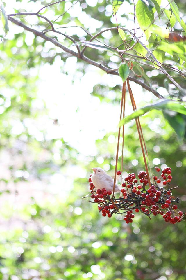 00バードフィーダ― 鳥 餌場 作り方 木の実