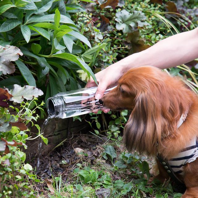 【わんこのお散歩マナー】 簡単おしっこ臭対策! クエン酸の消臭水の作り方