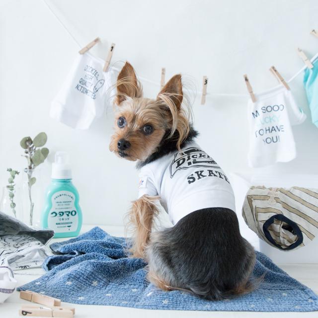 犬服のお洗濯★Tシャツを長持ちさせる3つのコツ