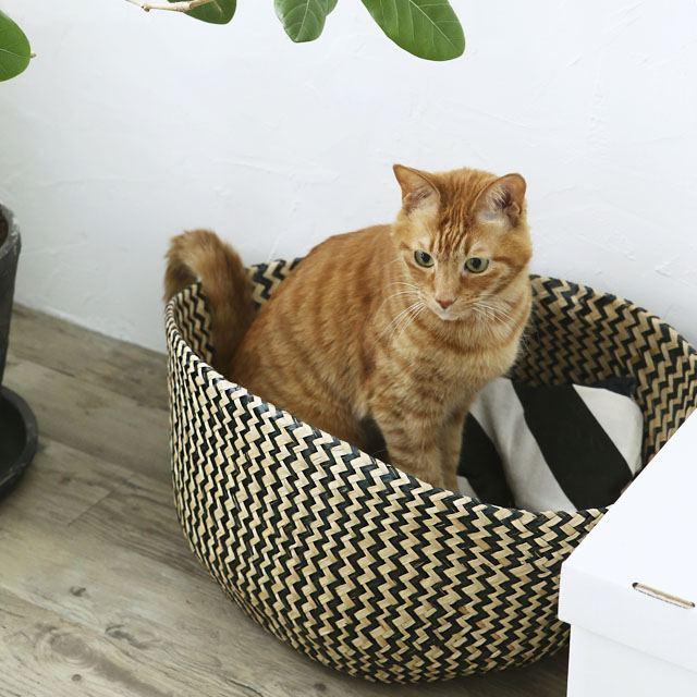 使える!IKEAのバスケットが猫の夏用ベッドにピッタリ♪