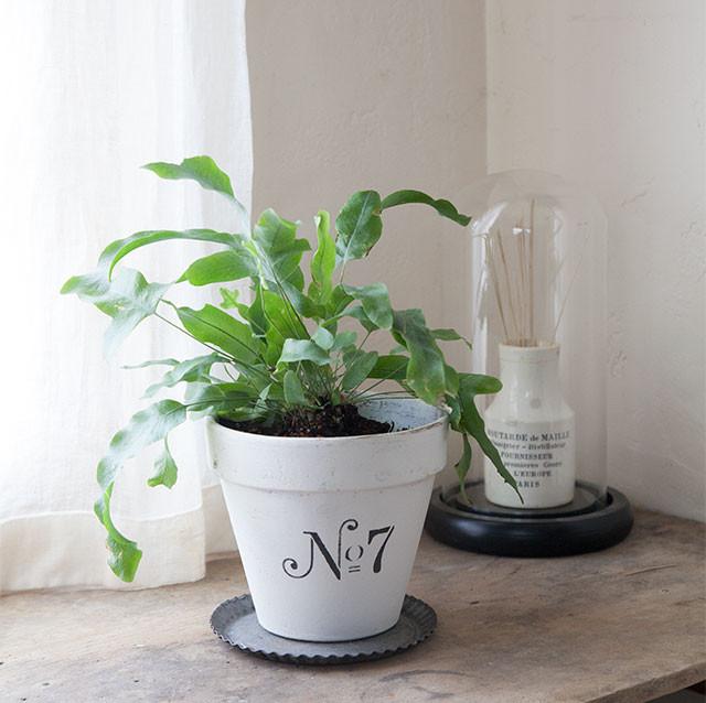 簡単ペイントで植木鉢をアップサイクル 狭い空間も洋書風ガーデニング♪