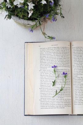 小さな鉢花を、少し厚めの本の間にはさみます。 1ページに2~3本以上入れないほうが、 乾きやすく、きれいに押し花になります。