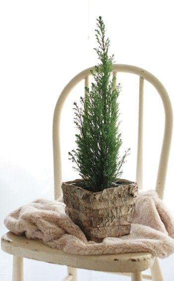 リースに使用するコニファーは、 お庭やベランダで植えられているものでOK。 わざわざお花屋さんで 調達する必要もありません。