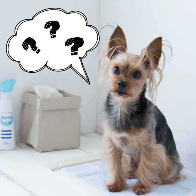 """それって本当? 犬のトイレトレーニングで""""声かけ""""は有効?"""