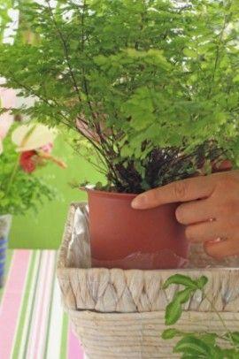 (1)水漏れ防止のためにバスケットの中にセロファンなどを敷き、    大きなアジアンタムの鉢を入れ、    次に小さいプテリスのポットを入れます。
