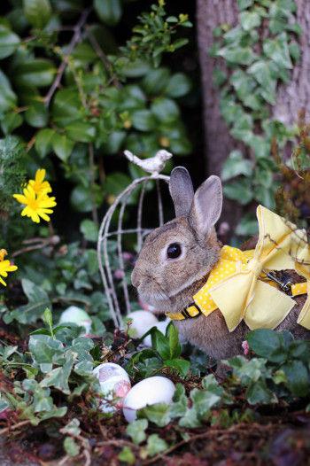 イースターシンボルのウサギちゃん。 ハーネスもイースターカラーでおしゃれしてみました。 見ているだけで癒しになります。