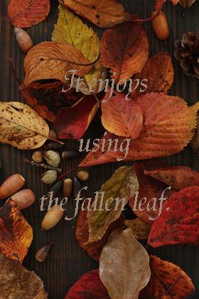 落ち葉を使って簡単インテリア・アレンジ