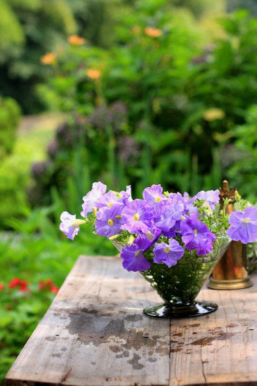 真夏の庭仕事~ペチュニアの切り戻しとアレンジ~